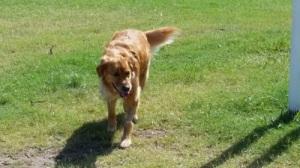 Bella at park 3